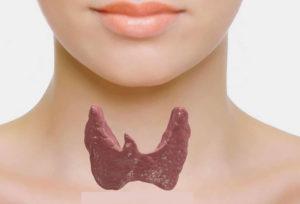 Тиреоидные гормоны щитовидки