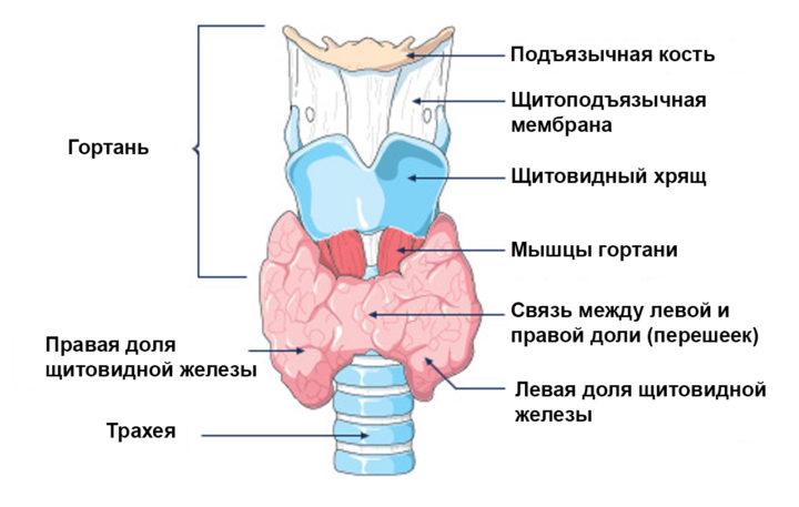 признаки заболевания щитовидки