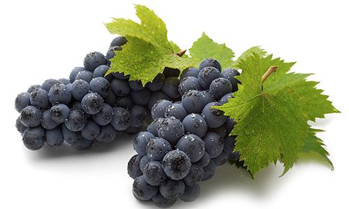 Употребление винограда при воспалении поджелудочной железы может принести пользу и вред в зависимости от формы и стадии заболевания